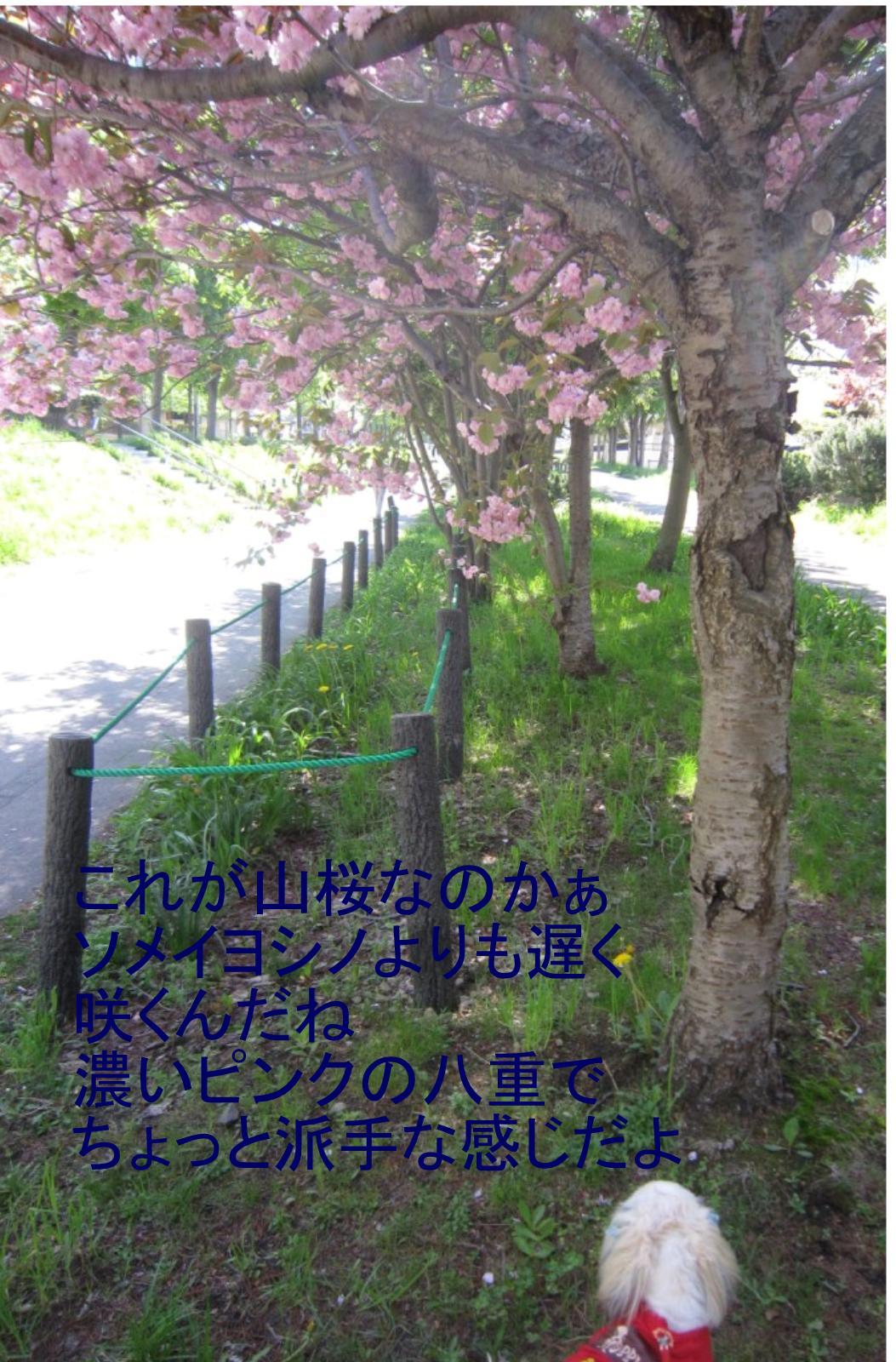 Img_0832_2